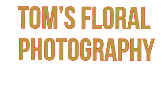 tom's floral  photography
